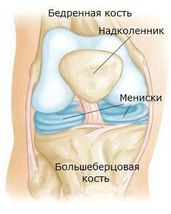 Анатомическое строение коленного сустава