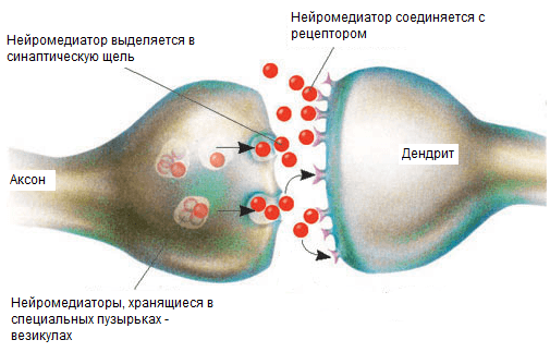 Захват ацетилхолина