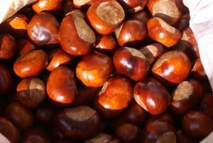 Конские каштаны или плоды конского каштана