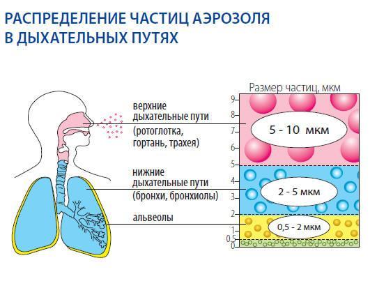 Распределение частиц в дыхательных путях при использовании ингалятора