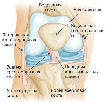 Строение коленного сустава в норме, вид спереди