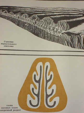 Эпителий имеет специальные выросты – реснички и клетки, вырабатывающие слизь