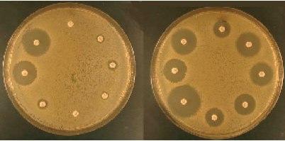 Антибиотикограмма
