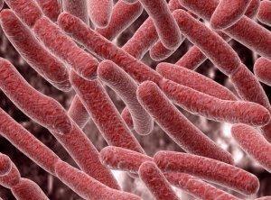 Вредоносные бактерии