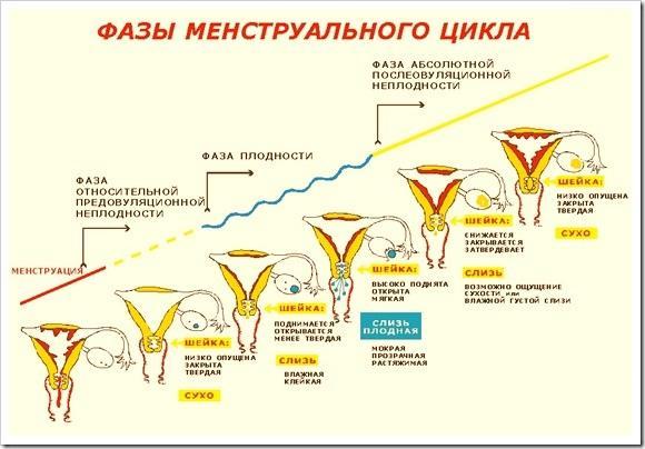 Скачки менструального цикла