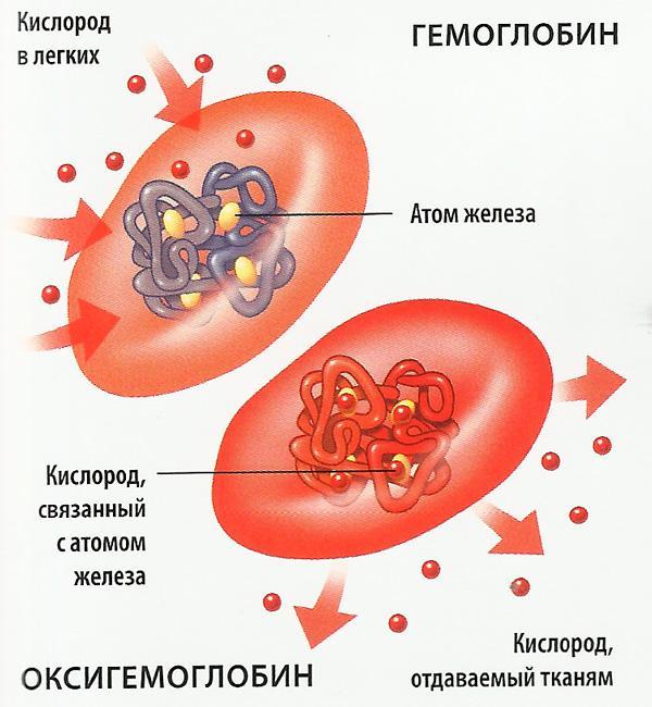 С чем связано увеличение железа в крови