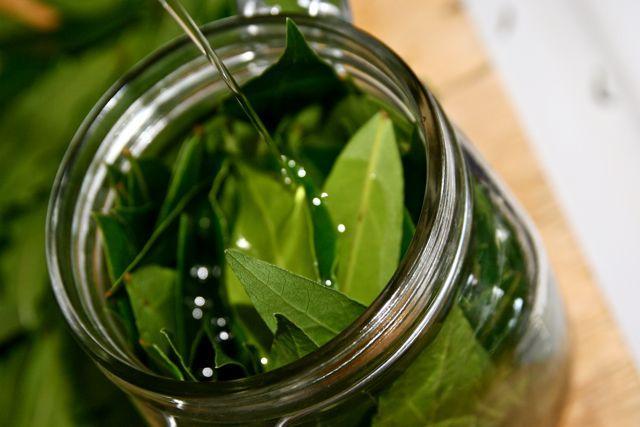 Масляная настойка лаврового листа