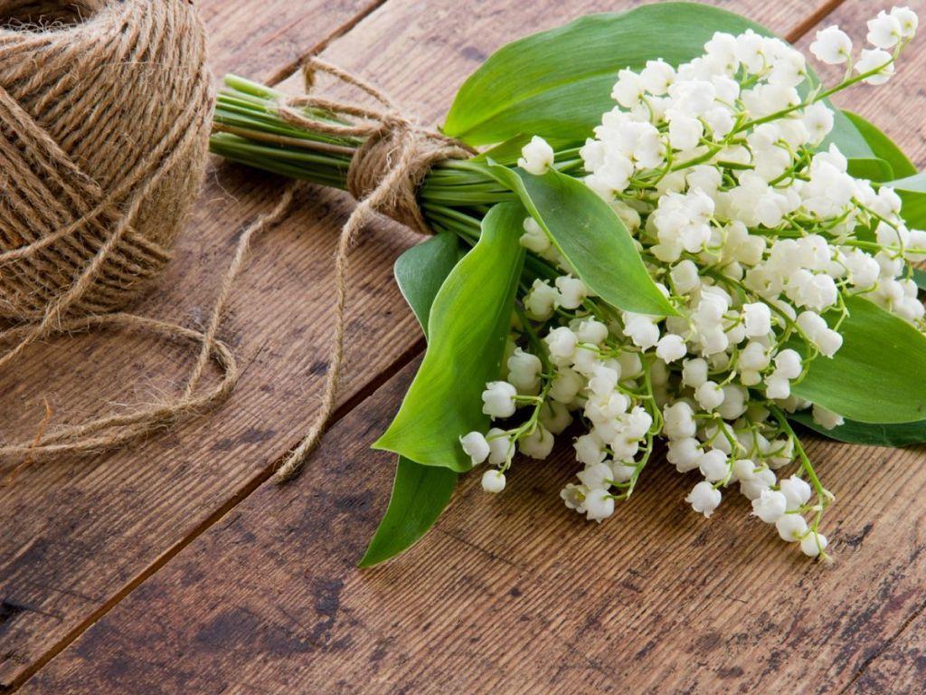 Цветы ландыша помогают в борьбе с сердечными заболеваниями