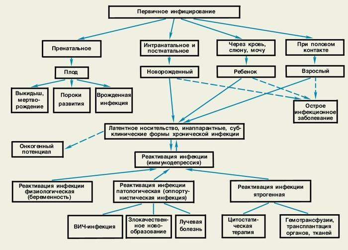 Передача цитомегаловируса