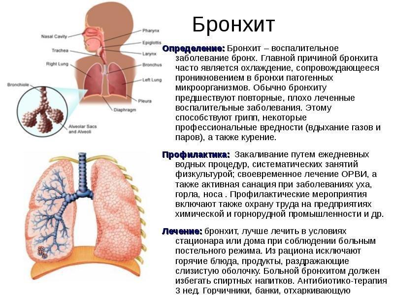 Профилактика и лечение бронхита
