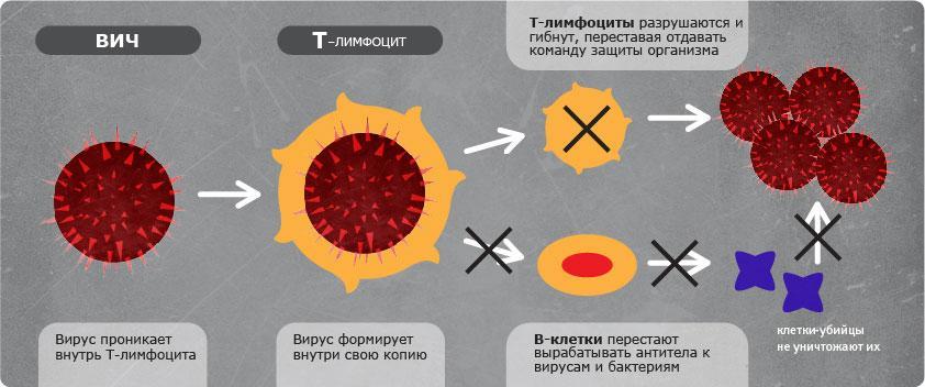 Схема поражения иммунной системы ВИЧ