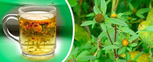 Чай из череды снимает симптомы аллергии и улучшает состояние кожи
