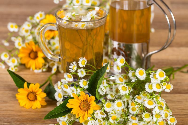 Чай из ромашки приготовить
