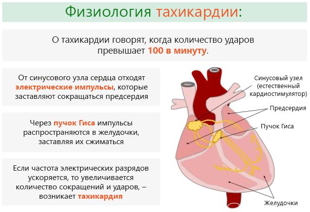 Учащенное сердцебиение причины что делать в домашних  165