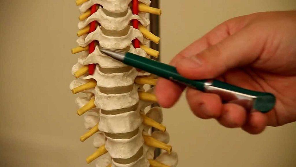 Вертебрология - это профессиональная область медицины, которая изучает заболевания позвоночника и спины в целом, а также разрабатывает методы лечения
