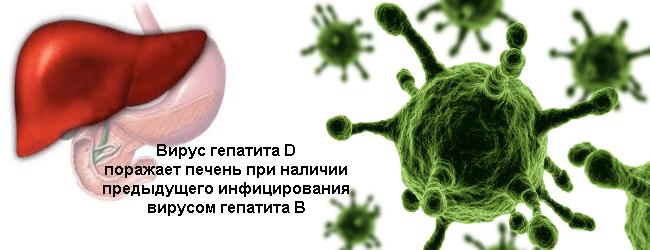 Вирусный гепатит D - особенности