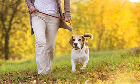После еды не ложимся спать, а отправляемся на небольшую прогулку