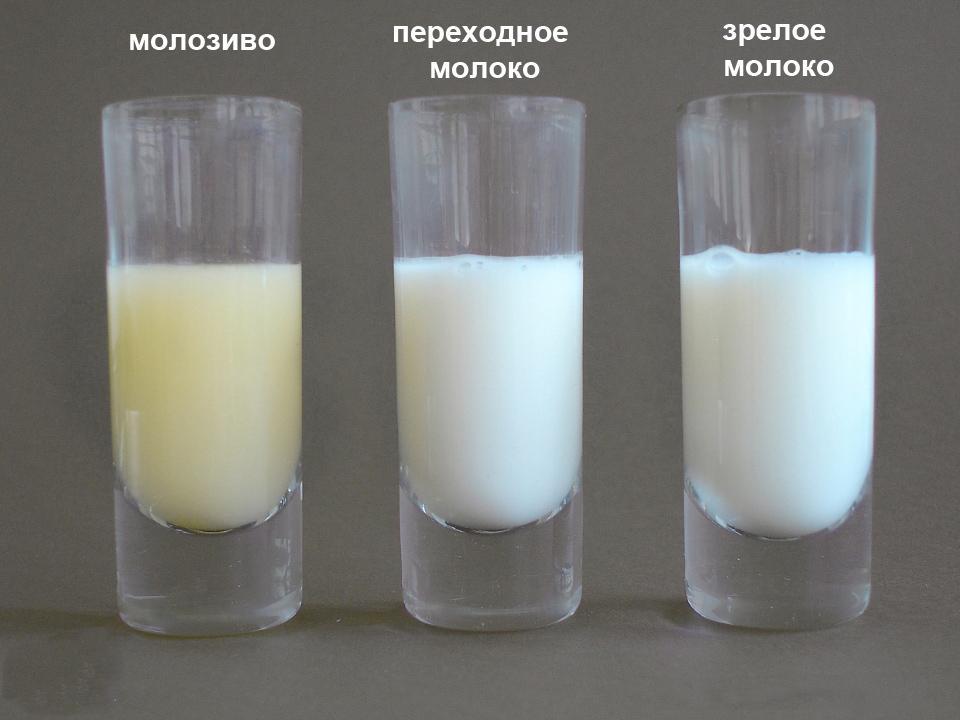 Грудное молоко - фото