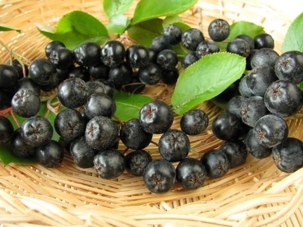 Используем сушеные листья черноплодной рябины