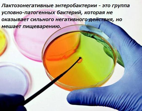 Лактозонегативные энтеробактерии