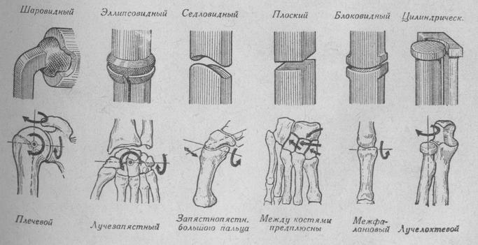 Схема основных форм суставов