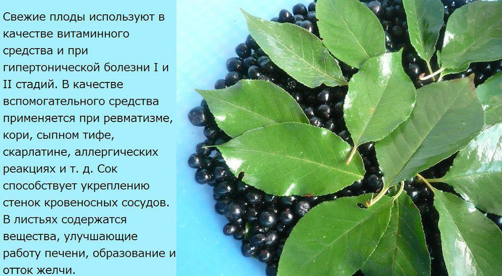 Применение черноплодки