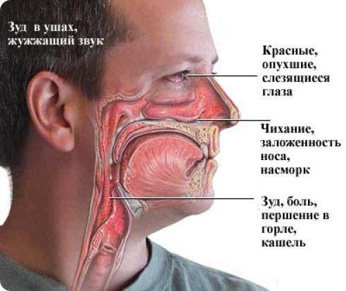 Першение в горле может возникнуть из-за аллергии
