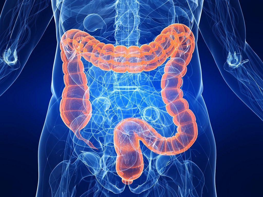 Питание при дисбактериозе кишечника у взрослых
