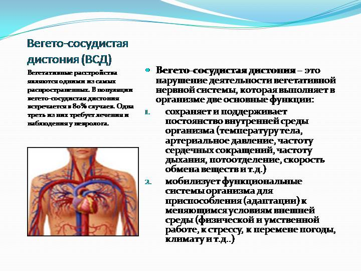Вегето-сосудистая дистония: лечение, препараты