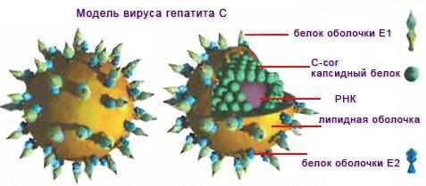 Гепатит С (вирусный)