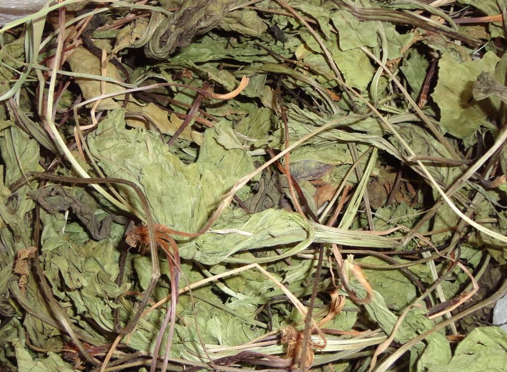 Сухие листья подорожника