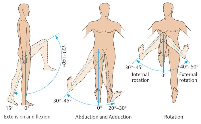 Функции суставов