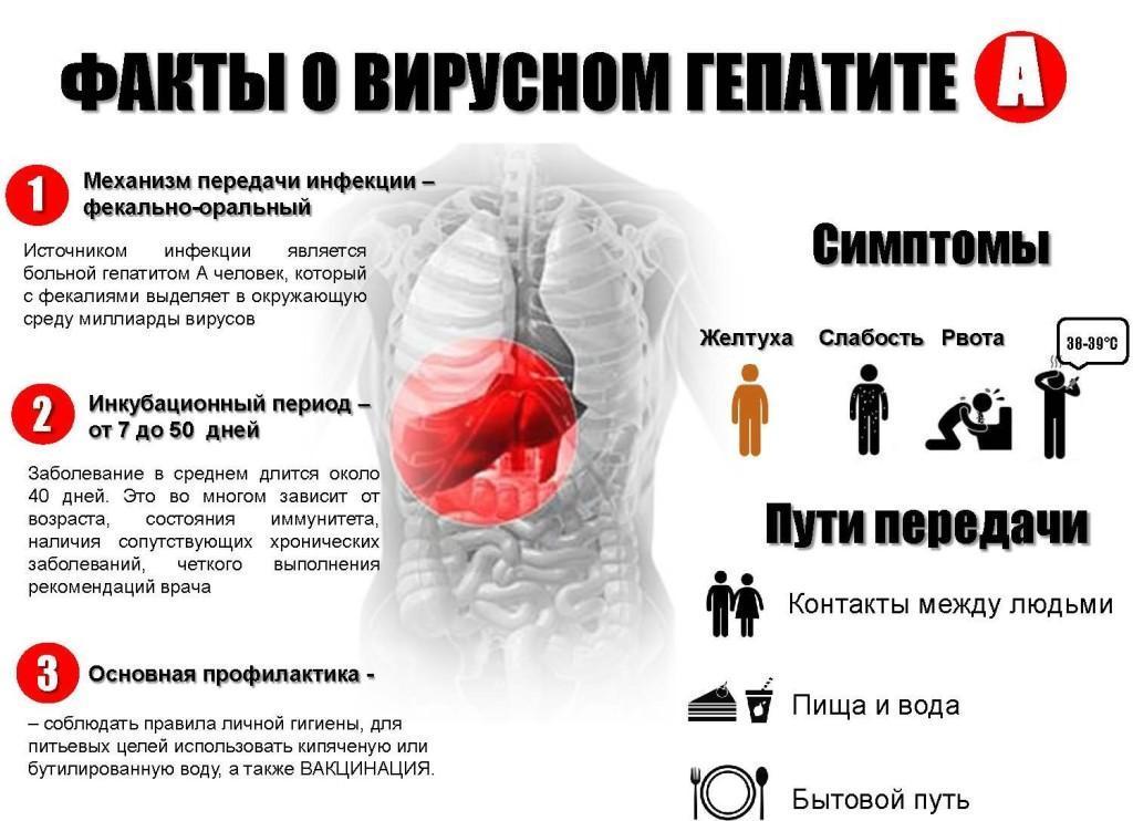 Факты о вирусном гепатите А
