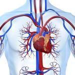 Болезни сердца и сосудов, диета гипертоника