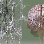 Болезнь Альцгеймера последняя стадия: сколько живут