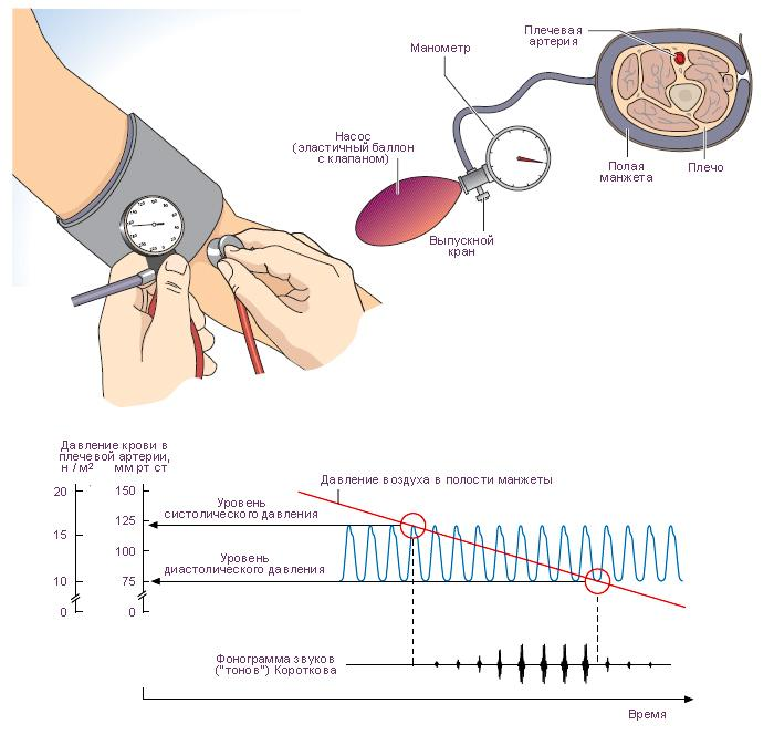 Давление крови - измерение