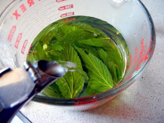 Лечение листьями малины