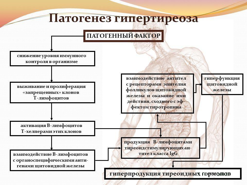 Патогенез гипертиреоза