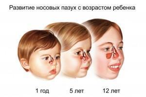 Развитие носовых пазух у детей