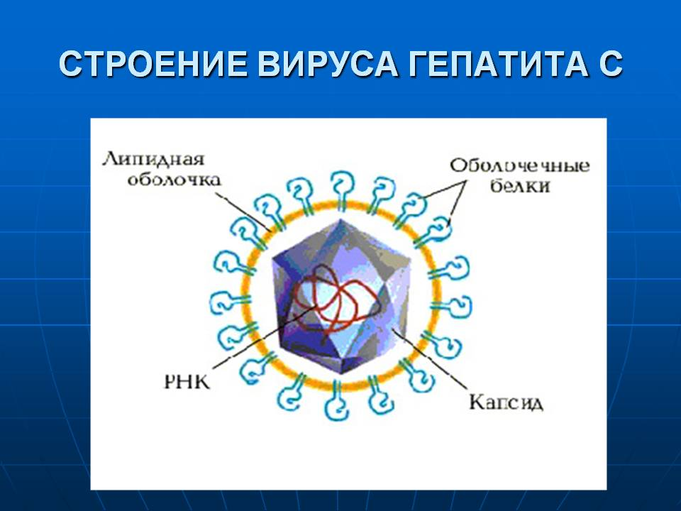 Строение вируса гепатита С