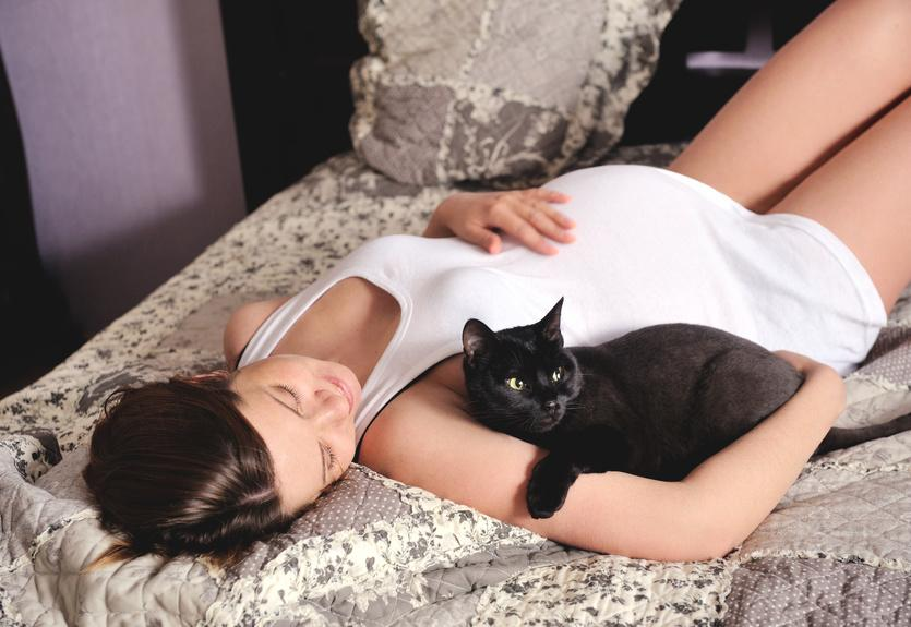 Помините о методах профилактики токсоплазмоза, особенно во время беременности