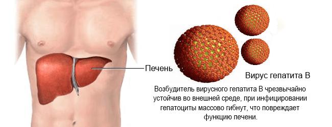 Действие гепатита В