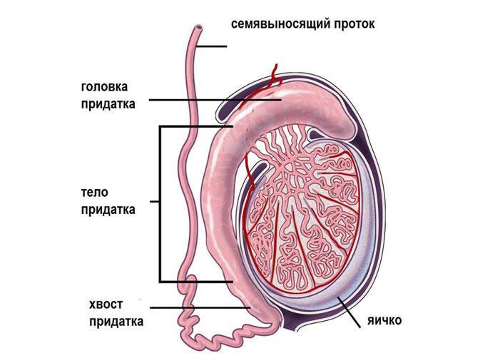 Урологические заболевания у мужчин фото