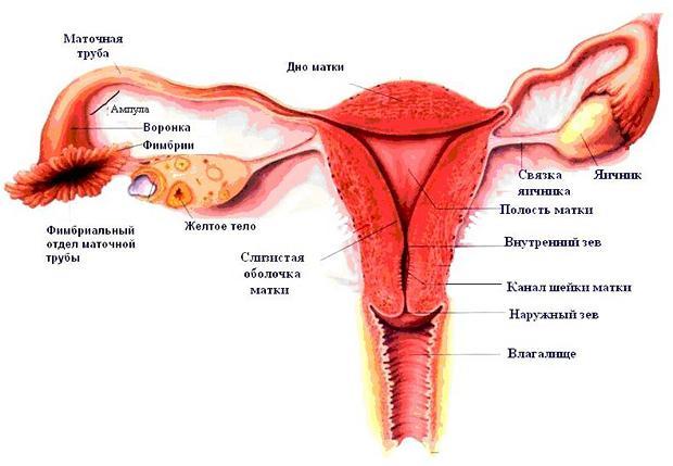 Разрыв маточной трубы происходит от 4 до 12 недель