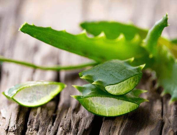 Свежие листья алоэ повышают упругость кожи, что необходимо при появлении послеоперационной грыжи
