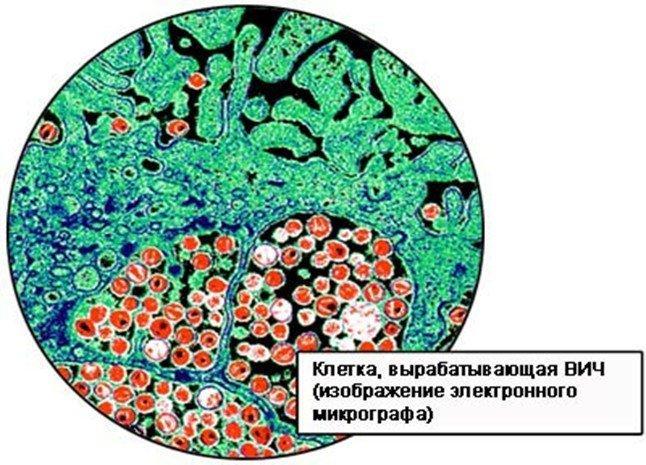 Сколько ВИЧ живет вне организма