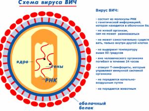 Схема вируса ВИЧ