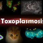 Токсоплазмоз: IgG положительный IgM положительный