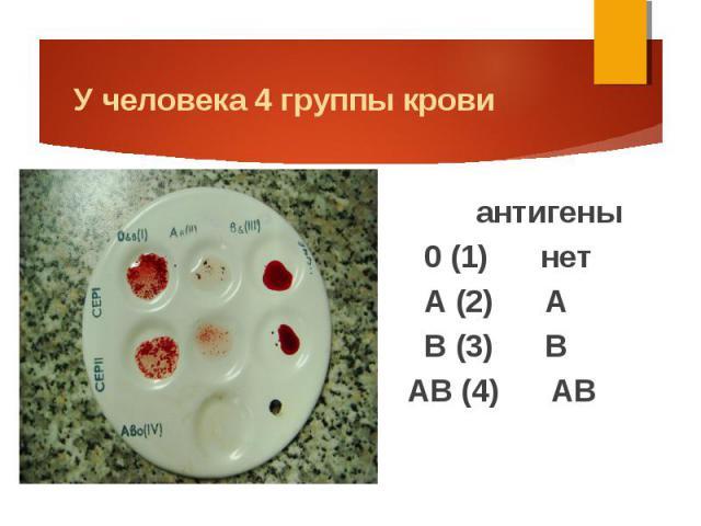 Антигены по группам крови человека