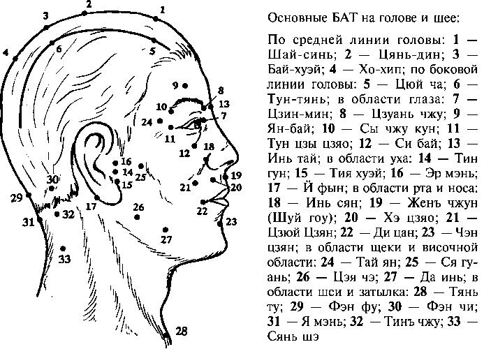 Биологические активные точки на голове и шее